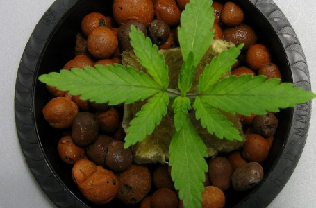 Growing Cannabis Safely at Home