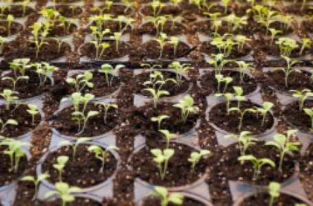 GrowerIQ Announces Cutting-Edge Sensor Technology to Prevent Crop Loss