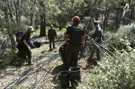 Illegal pot farms on public land create environmental hazard
